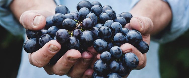La alimentación como Derecho Humano